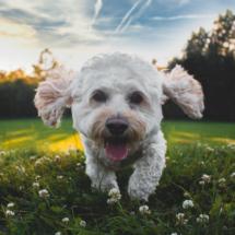 首に負担のかからないハーネスで愛犬とお散歩!胴輪が抜けない安心デザイン!