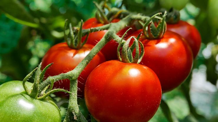 トマトで紫外線対策